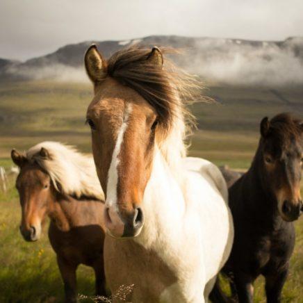 anticorps chevaux thérapie covid-19