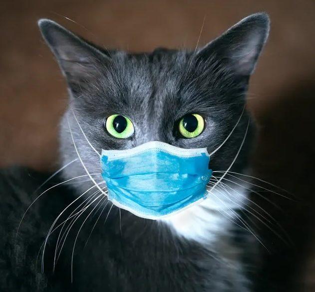 antiviral chat