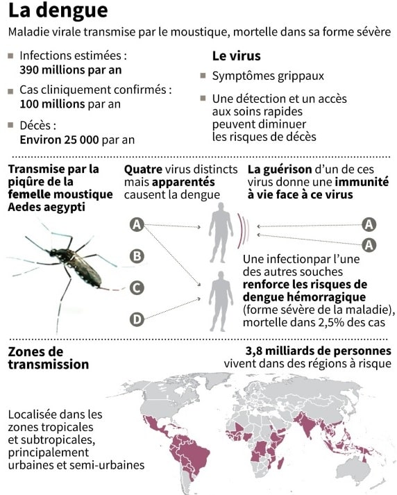 dengue donnees