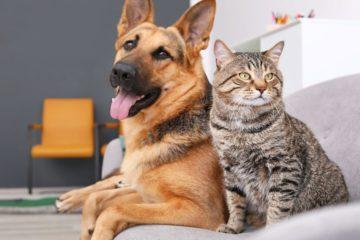 memoire chiens chats