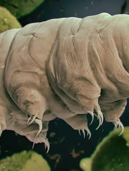 resistance tardigrades