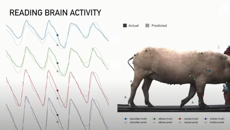 test animal implant cérébral neuralink