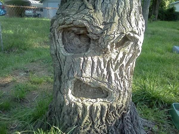 visage arbre