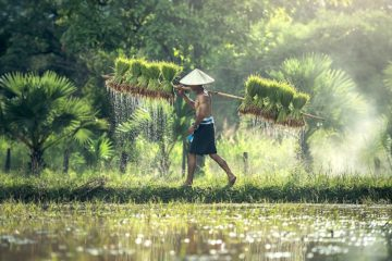 40 pourcent especes vegetales mondiales menacees extinction