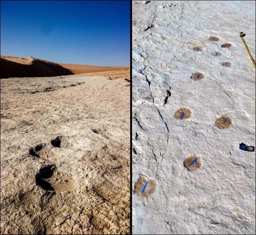 empreintes fossilisées chameaux éléphants