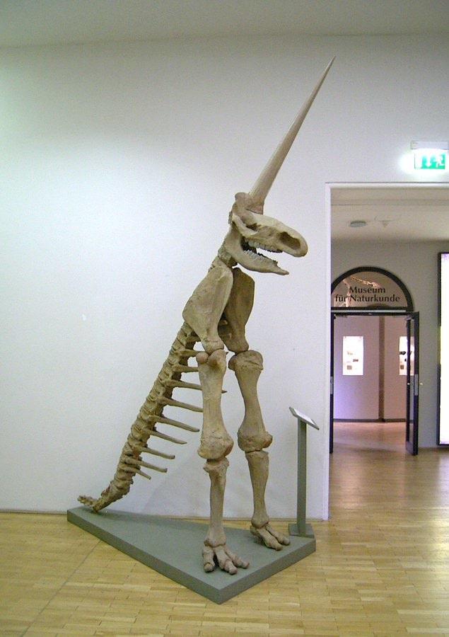 erreur squelette rhinocéros laineux