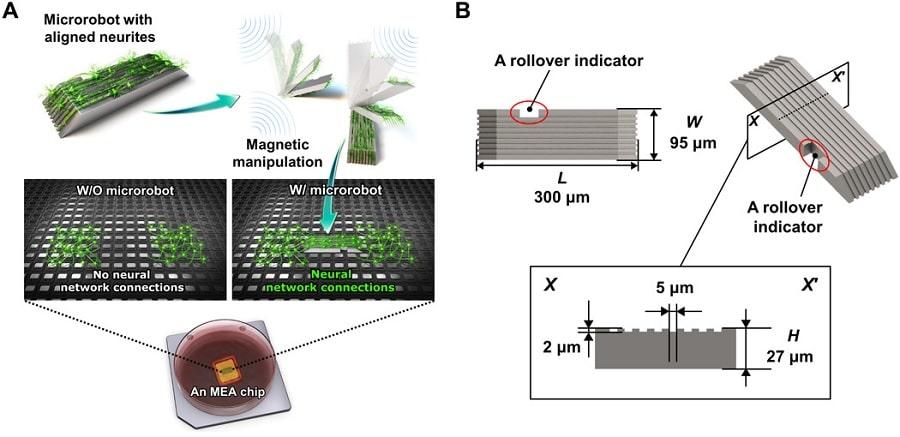 fonctionnement dimensions structure microrobot champ magnétique