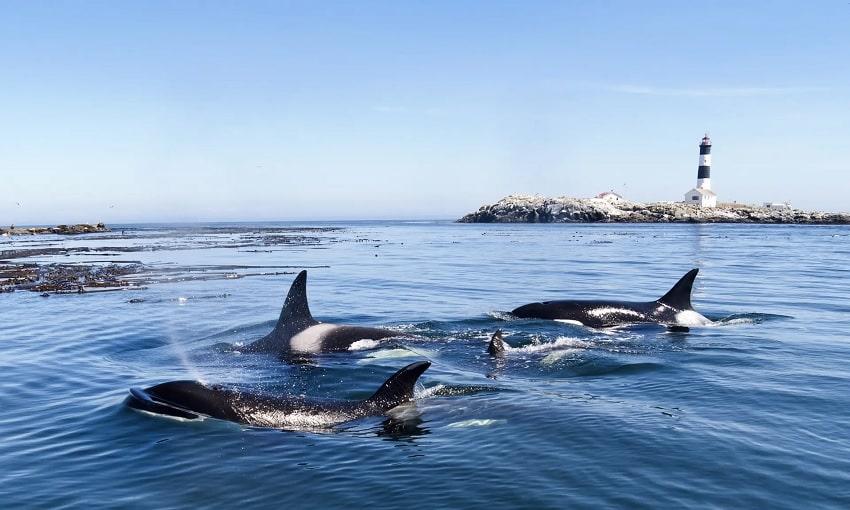 groupe orques stress harcèlement pêche bateaux