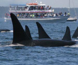 groupes orques attaque bateaux Espagne Portugal