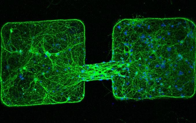 microrobots communication amas cellules neuronales microscope