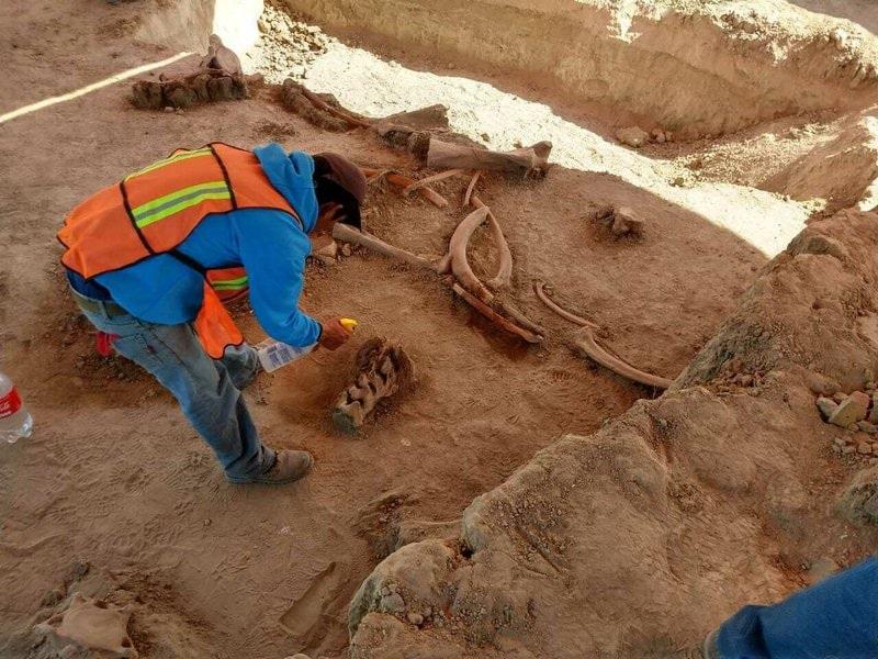 découverte os mammouths mexico