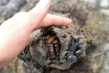 ours cavernes etonnamment bien preserve periode glaciaire decouvert siberie