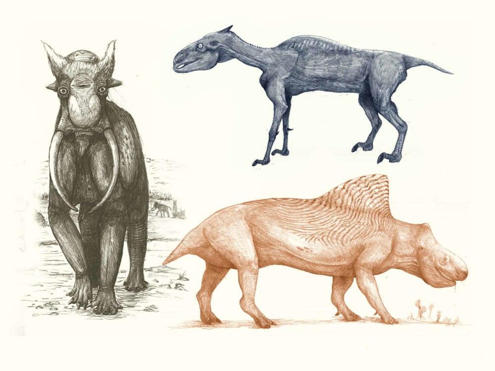 représentation animaux squelette kosemen