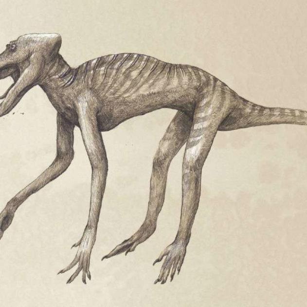 représentation babouin squelette kosemen