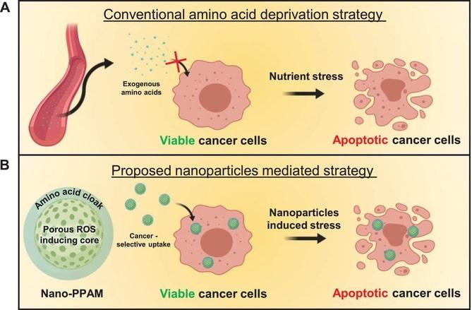 stratégies destruction cellules cancéreuses acides aminés nanoparticules