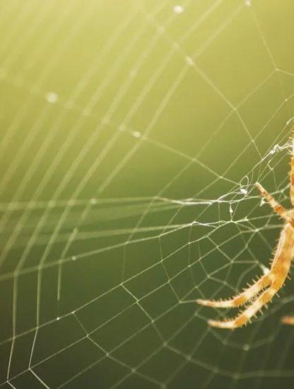 toile araignee