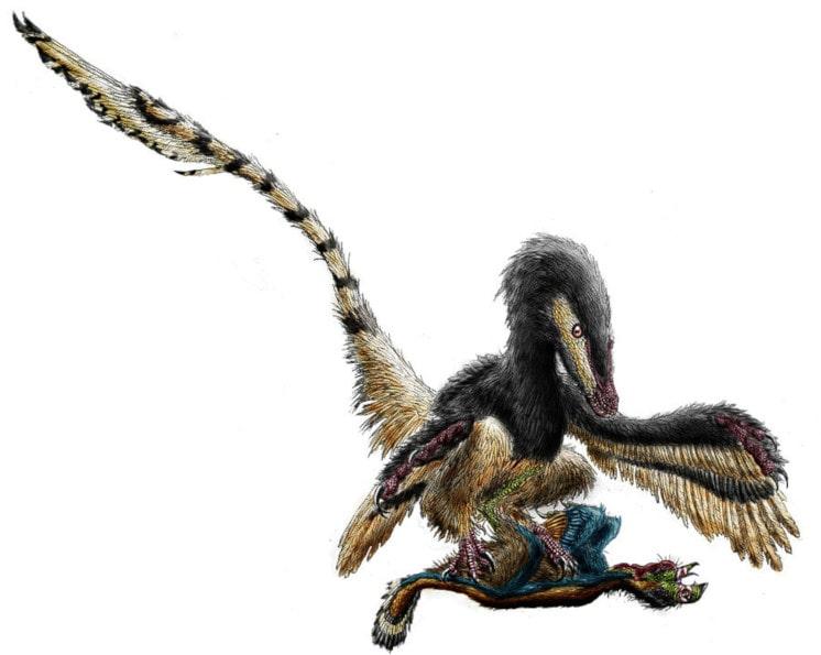 vélociraptor oiseau proie