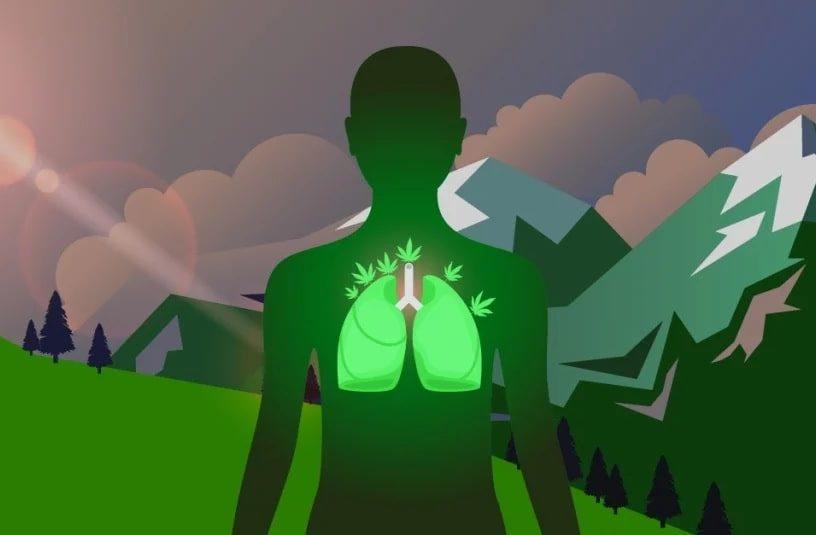 CBD réduit dommages pulmonaires COVID couv
