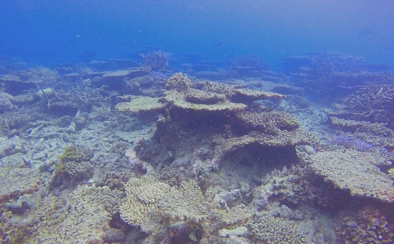 blanchiment coraux grande barrière corail
