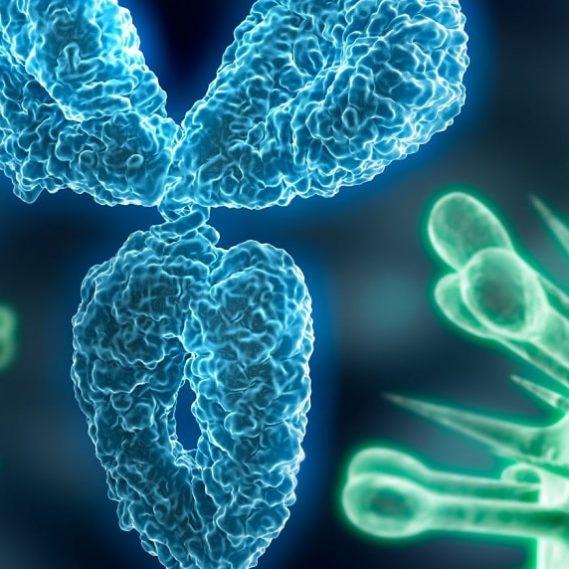 covid-19 certaines formes graves dues réactions auto-immunes couv