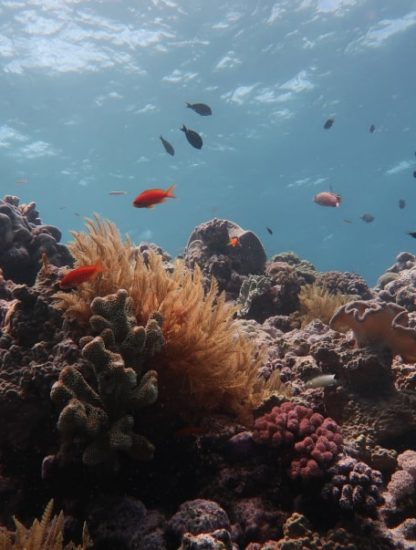 disparition coraux grande barrière corail