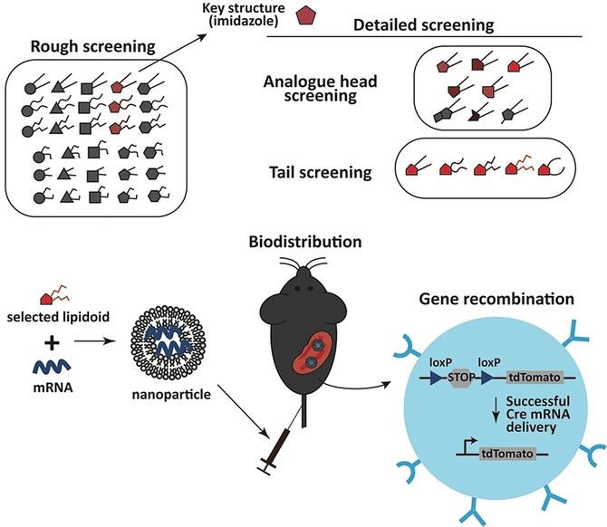 édition génétique CRISPR vivo