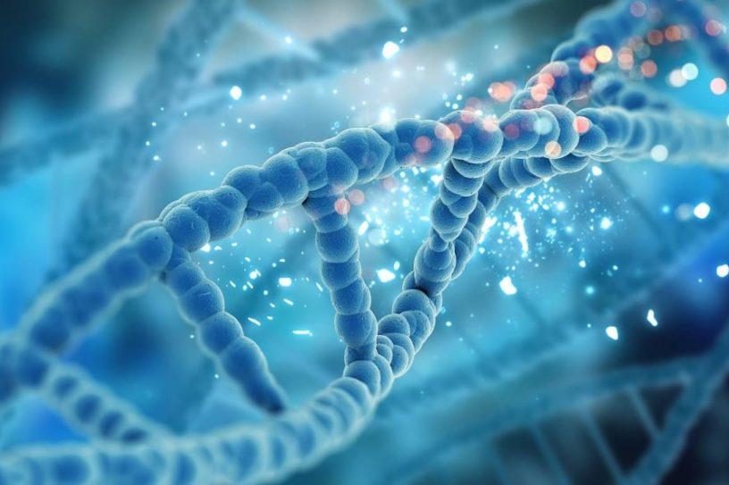 mécanisme réparation dommages ADN restauration fonctions cellulaires couv