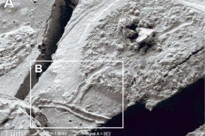 neurones intacts vitrification victime éruption vésuve