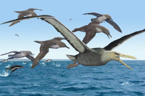 fossile oiseau géant antarctique