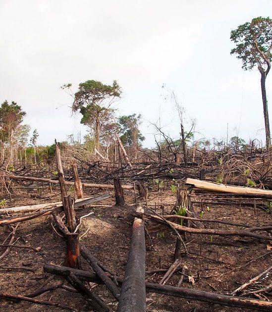 protéger environnement nécessaire ère pandémies couv
