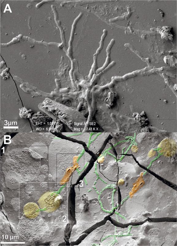 structure axones vitrification éruption vésuve