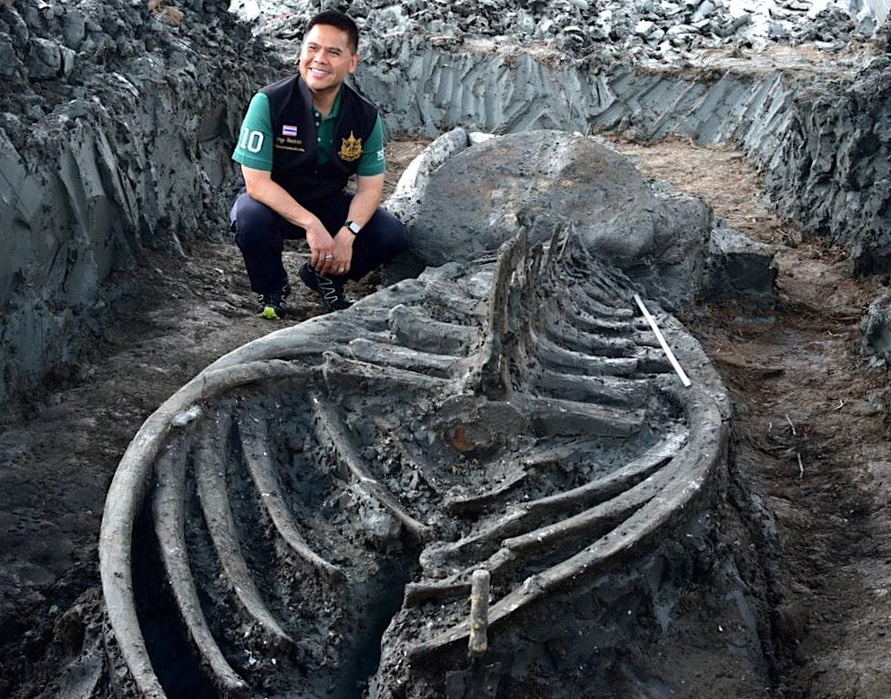 ancien squelette baleine renfermant indices changement climatique