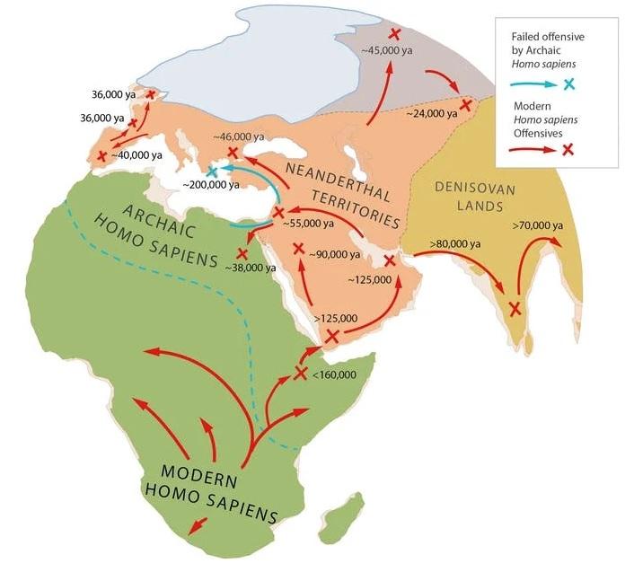 carte expansion Homo sapiens