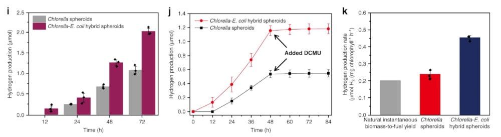 comparaison production hydrogène bactéries