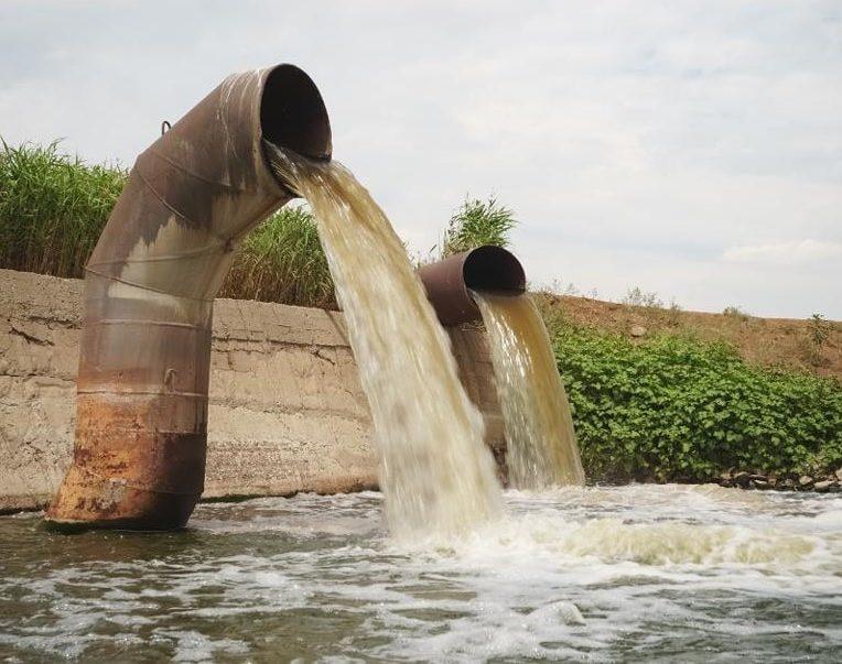 covid eaux usées pourraient sérieusement contaminer mammifères marins couv