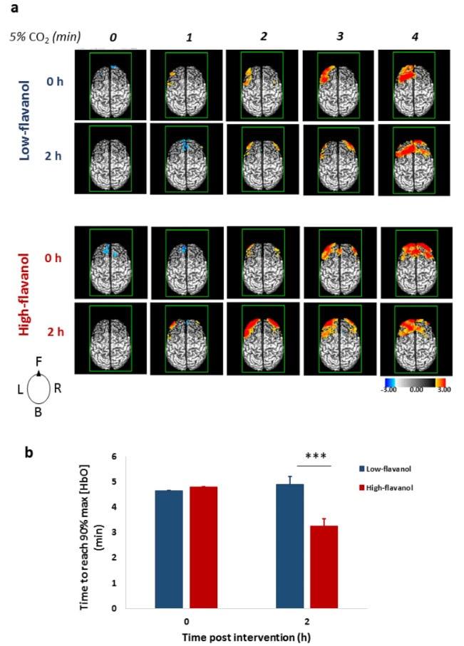 effets flavanols oxygénation cerveau