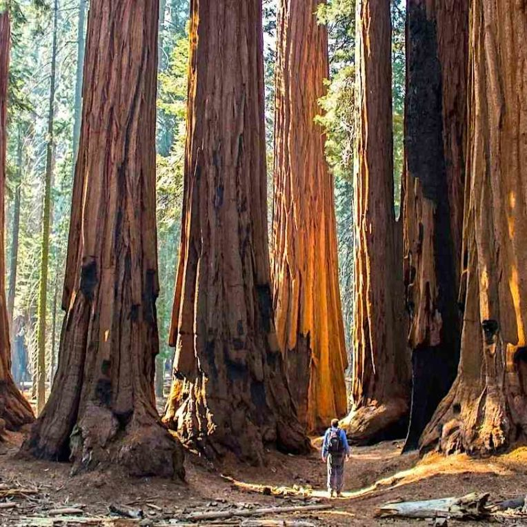 etude stockage carbone arbres propose solution stabilisation climat