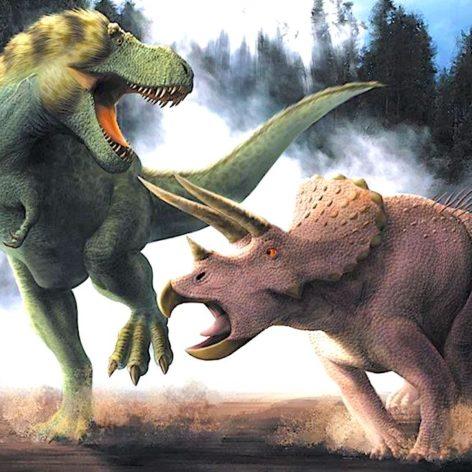 fossile t-rex triceratops bataille revele public