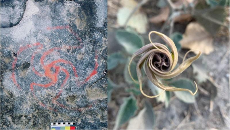 peinture plante datura