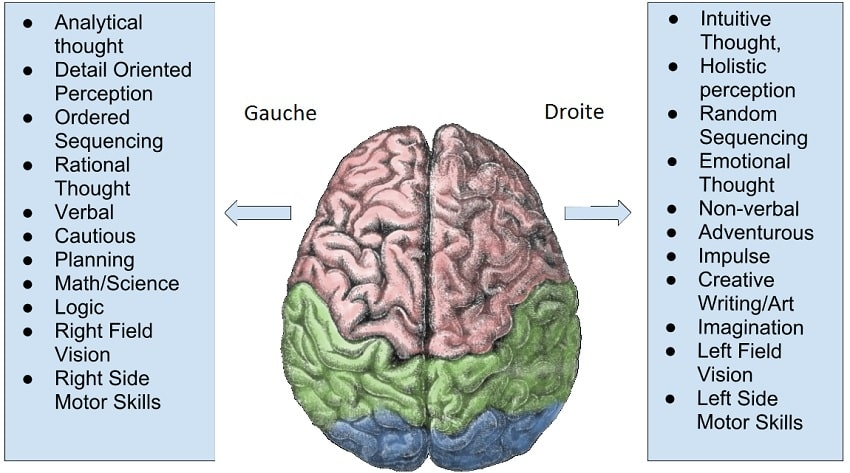 lateralisation cerveau gauche droite