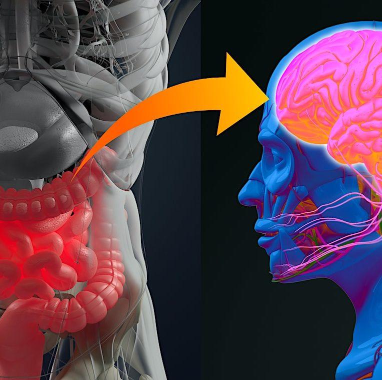 lien microbiote intestinal maladie alzheimer confirme
