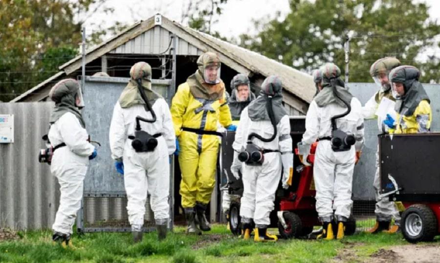 mutation covid Danemark annonce abattage 15 millions visons couv