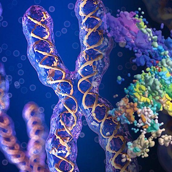 nouvelles images 3d precisent structure chromatine chromosomes-couv