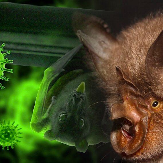 parent sars-cov-2 retrouve dans chauves souris cambodge