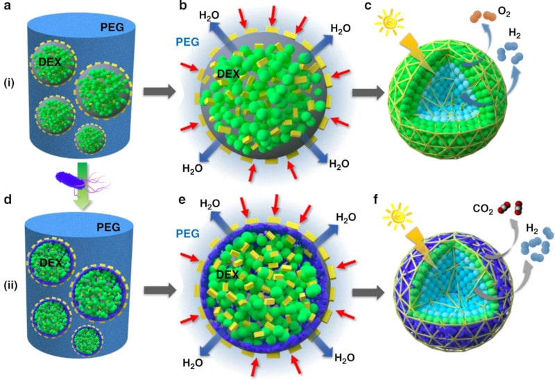 fabrication bioréacteurs hydrogène