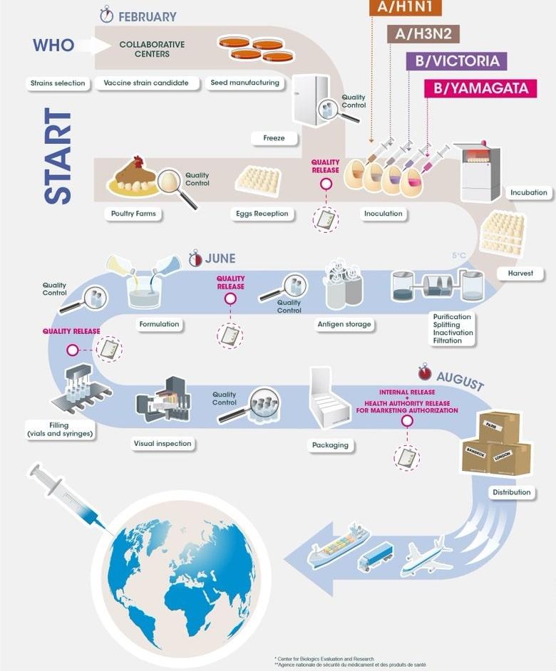 schéma production vaccin antigrippal