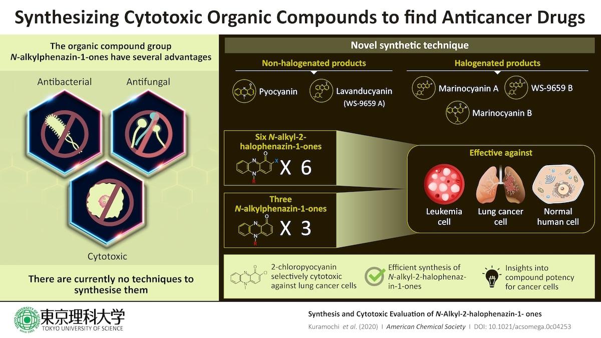 schema synthese evaluation cytotoxique n-alkyl-2-halophenazin