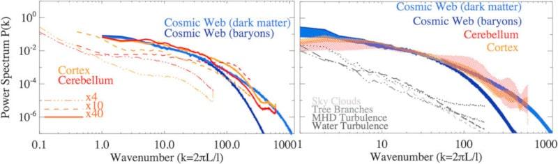 spectres densité réseaux cerveau univers