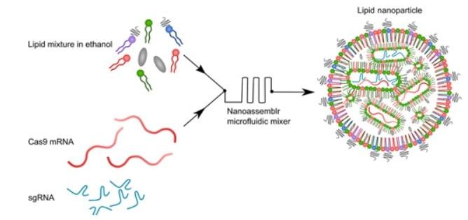 structure nanoparticule lipidique crispr arnm