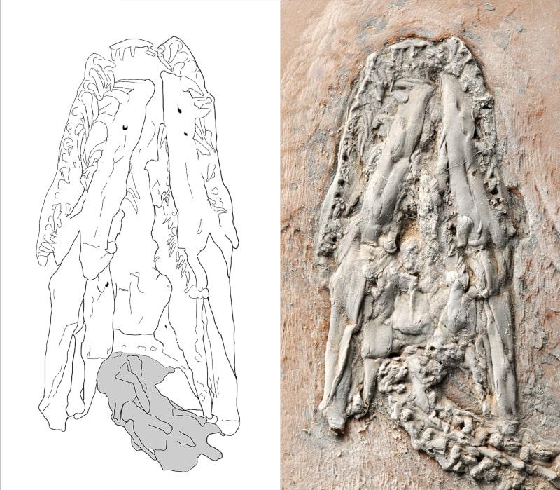 crane fossile python